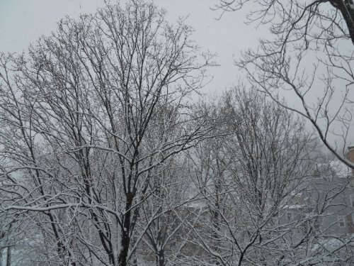 Snow03081301